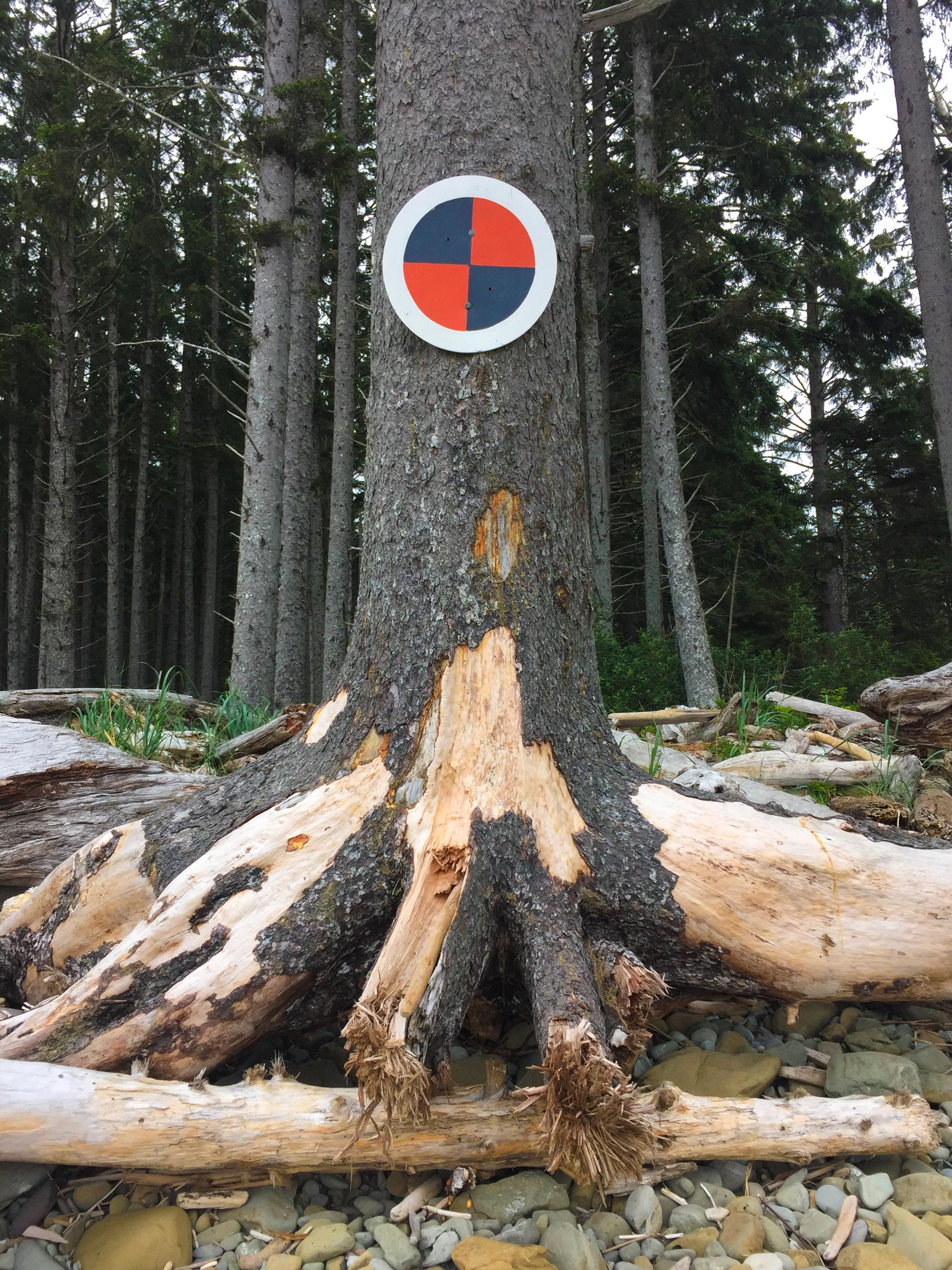 Tsunami symbol on tree in Olympic National Park